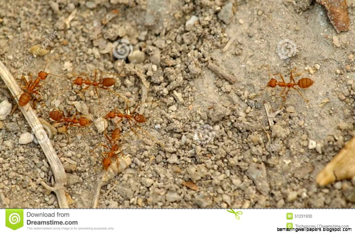 Ants Ground images
