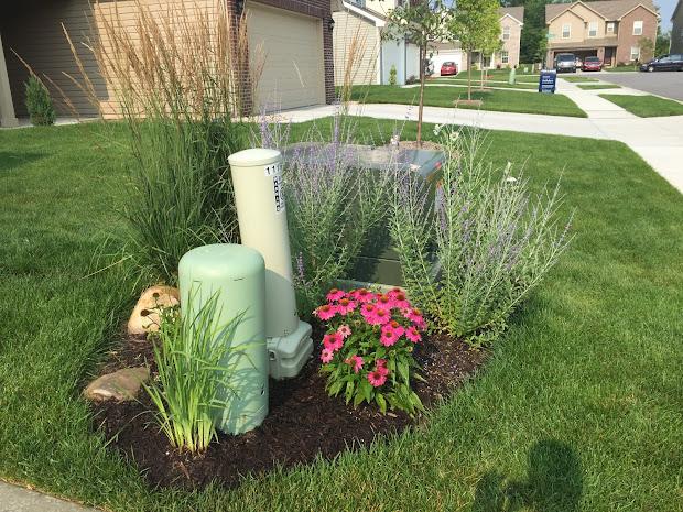 backyard neophyte landscaping