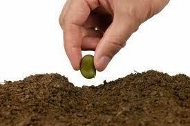 la semilla de cada dia
