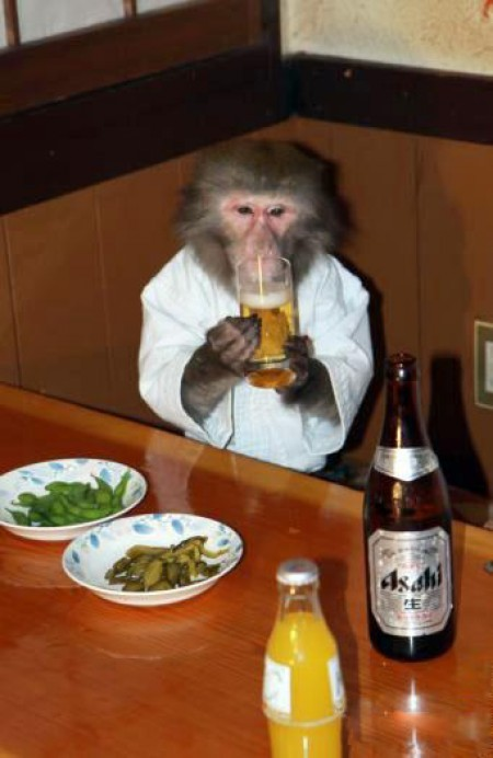 monkey-eating-and-drinking-beer1 - Lazy Sunday - Anonymous Diary Blog