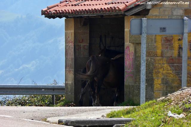caballos en parada de bus