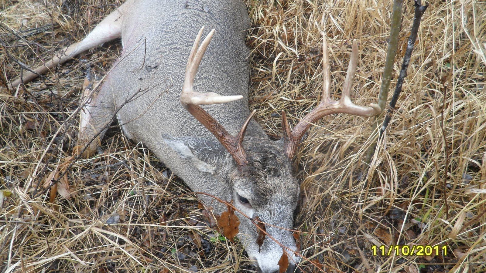 10 Point Buck Dead http://wolfwaters.blogspot.com/2011/11/hunt-continues-in-alberta.html