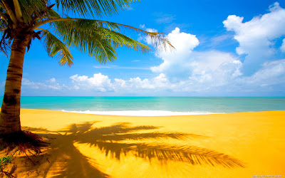 Dates Trees Beach Pictures HD Seaside Wallpapers Widescreen