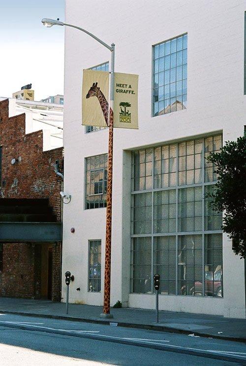 San Francisco Zoo - Iklan stiker kreatif