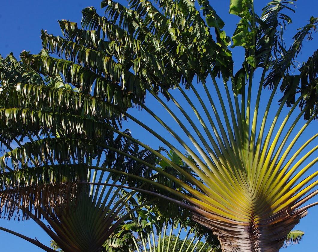 Deshaies et son jardin botanique les voyages de p pito for Jardin botanique ramadan 2015