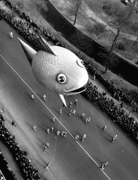 Peixe balão