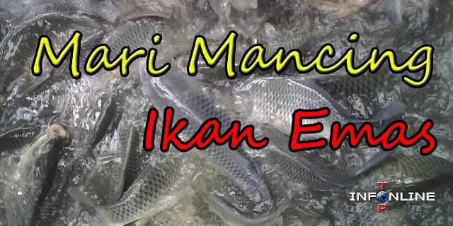 ikan mas, ikan emas, mancing ikan mas, galatama ikan mas