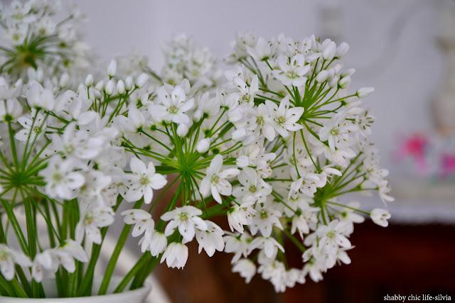 fiori d'aglio