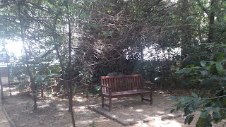 Namoradeira no Bosque do Brooklin