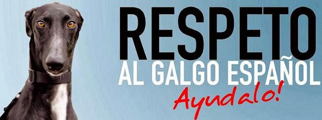 Galgo lover