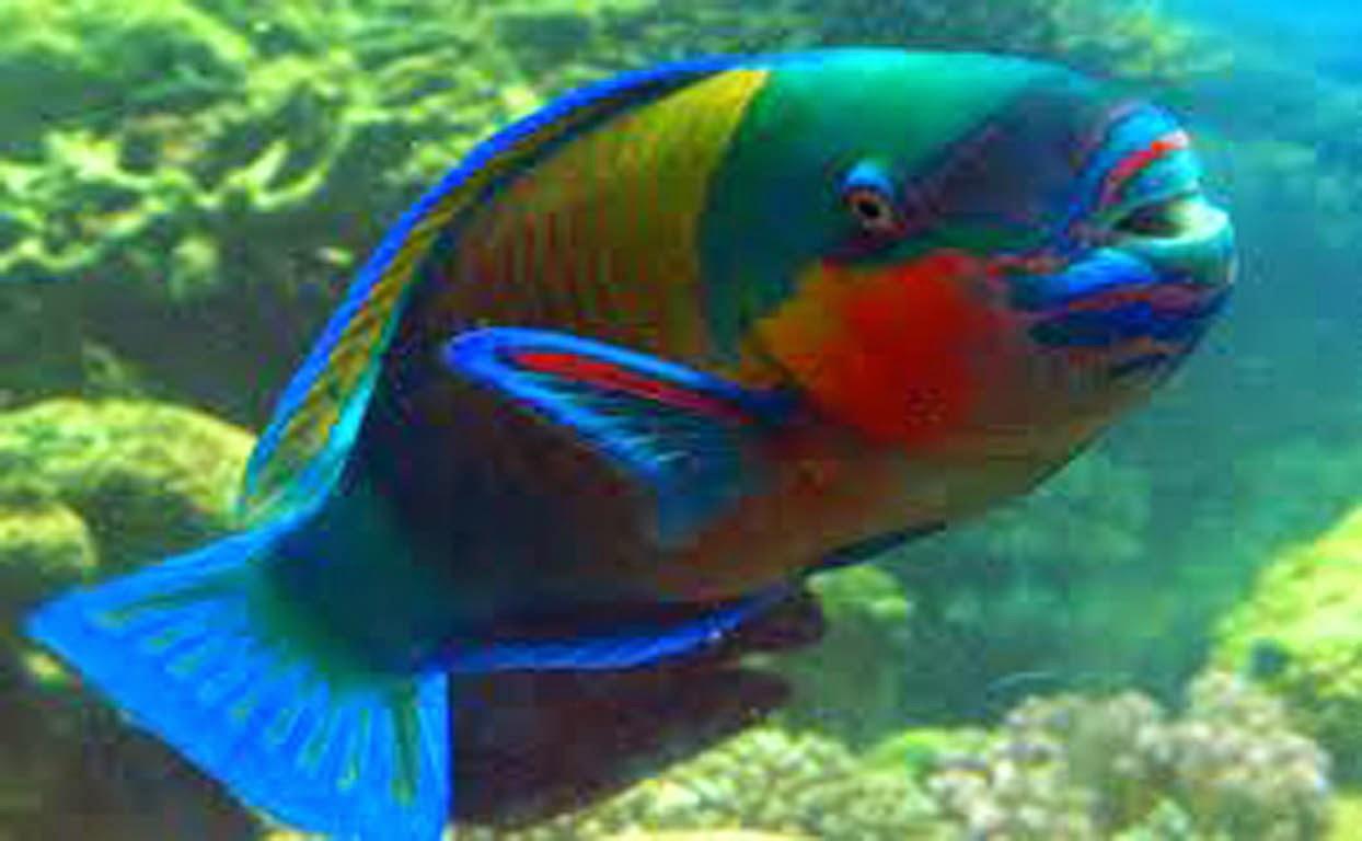 Jenis Ikan Hias yang Bagus dan Cocok untuk Di Pelihara Di Akuarium