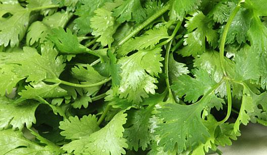 Esta erva pode ser utilizada como tempero na preparação de diversos