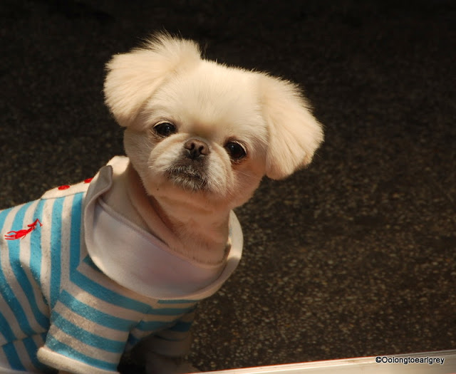 Dressed Dogs of Shanghai