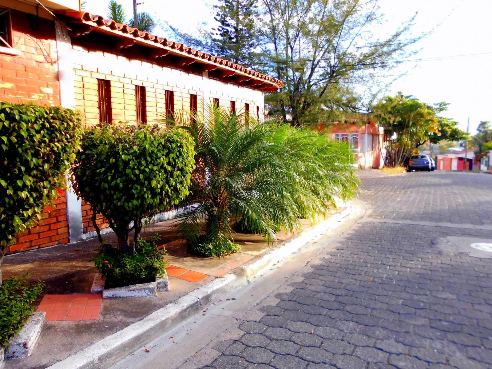 Calle con Palmeras y Ficus