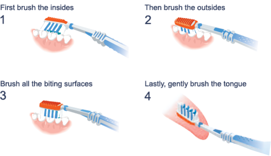 Dental health care how to brush teeth properly you must know always brush twice a day preferably first thing in the morning and again right before you go to sleep try not to eat or drink anything once you have ccuart Gallery