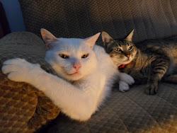 Tobias e Elvis