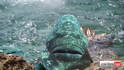 Sirenas reales encontradas vivas 2