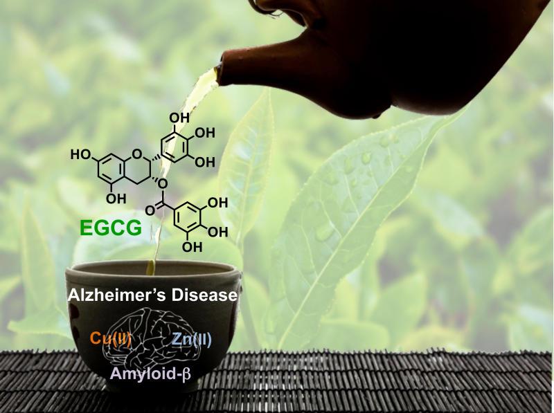 La EGCG del té verde protege contra el Alzheimer