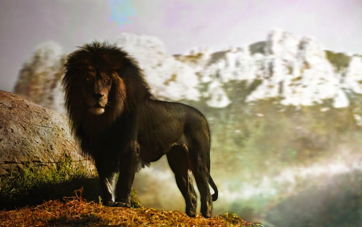 leão negro será real?