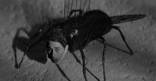 la mosca de la cabeza blanca