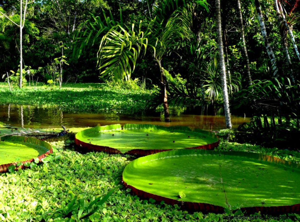 Sunrise over the cuyabeno river amazon rainforest ecuador tellus