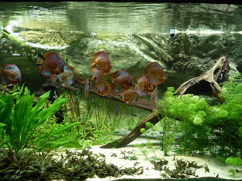 Gold stuff aquascaping for Aquarium wood decoration