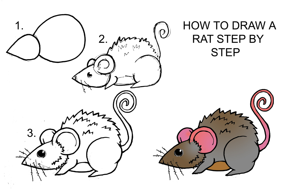 How to draw a rat coloring rat how to draw a handsome for How to draw a cartoon mouse step by step