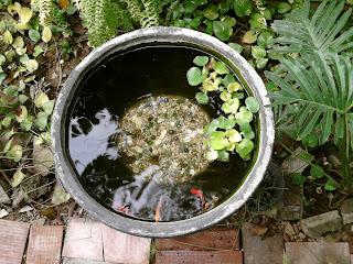 www.sehatdanhijau.blogspot.com