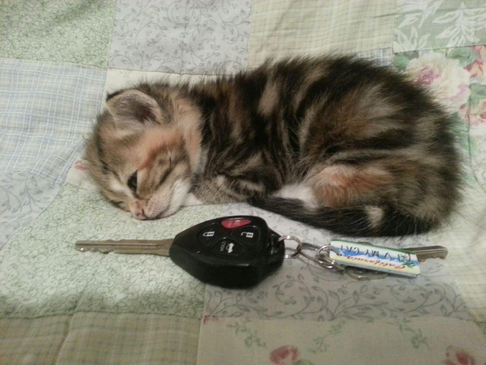 Сумасшедшие коты, фото 4