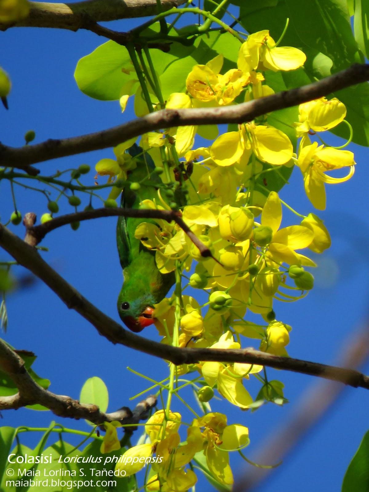 Maiabirds Brain Green Bird And Yellow Flowers