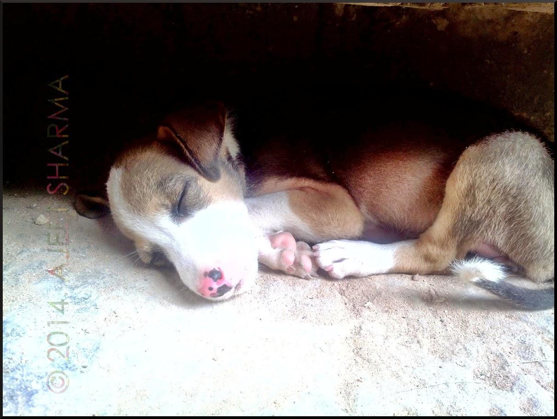 Puppy Sleeping Peacefully