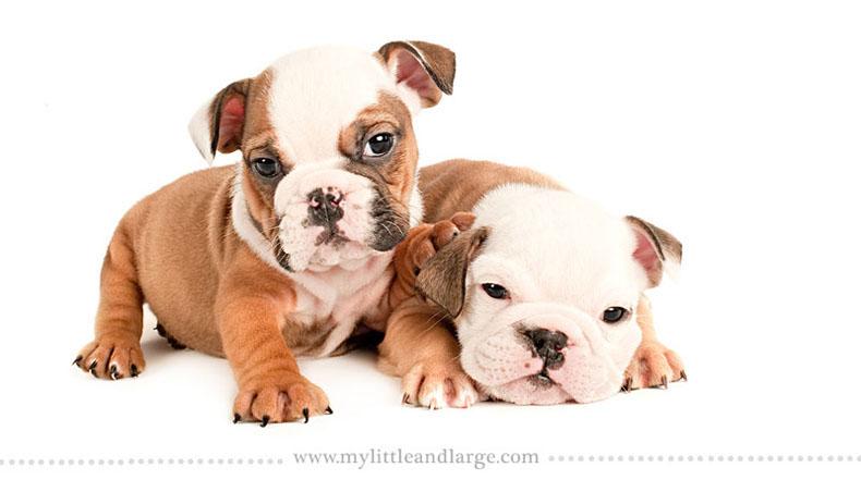 Como 17 diferentes razas de perros se ven a las 6 semanas de edad