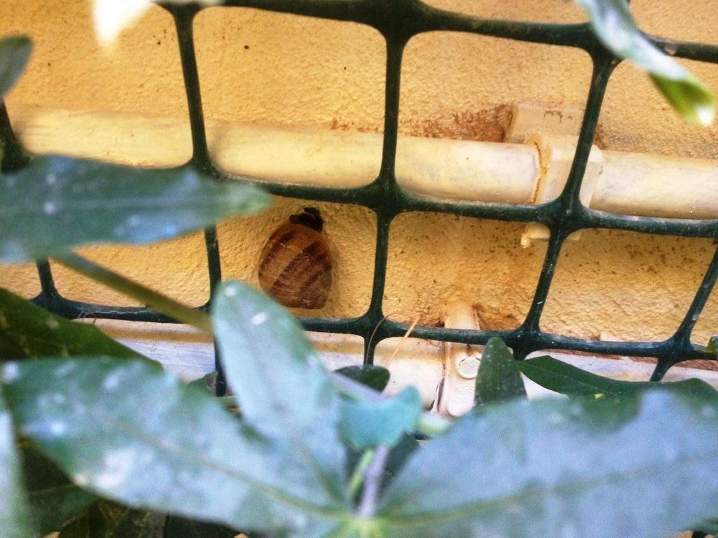 snail behind trellis