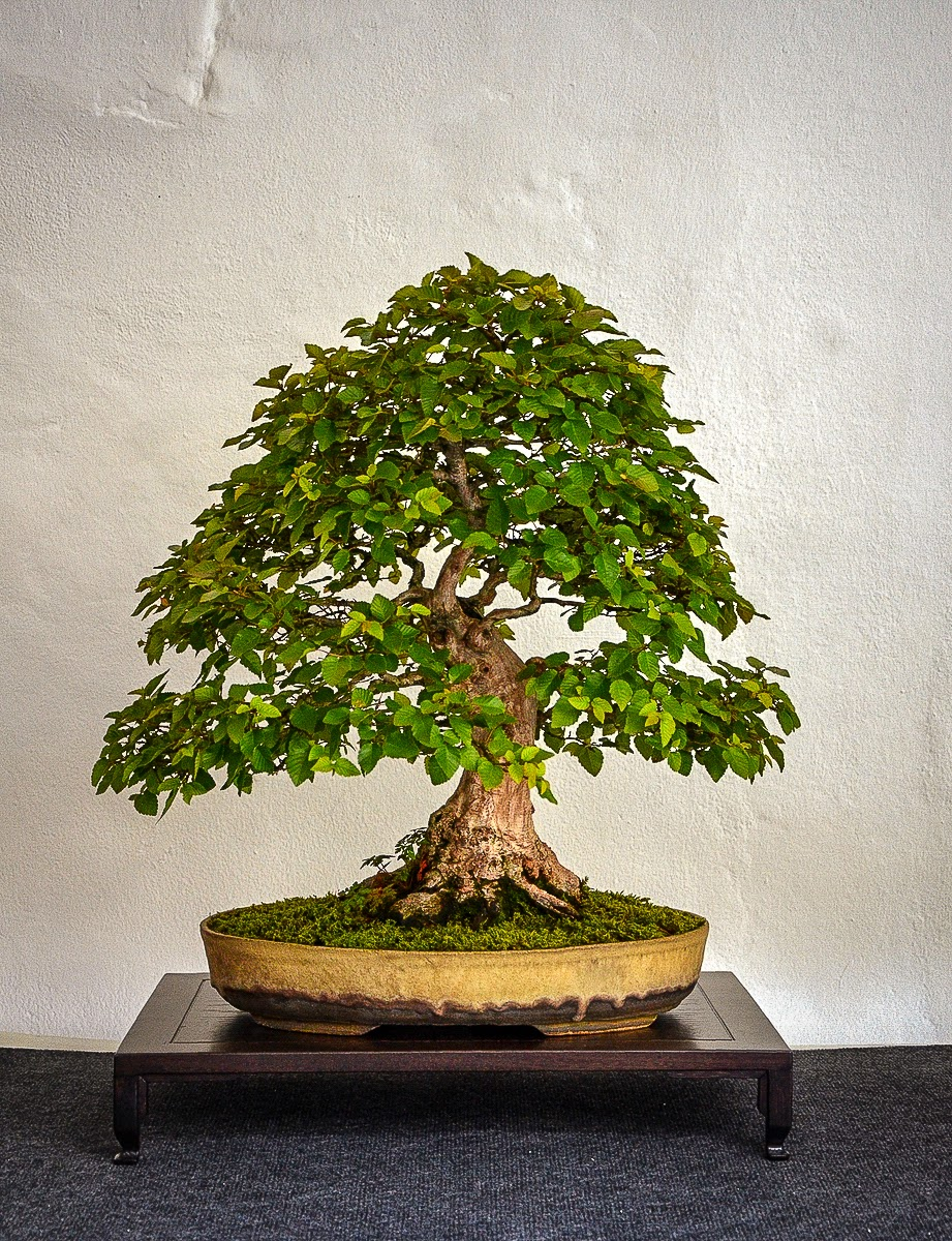 Bonsai Living Art September 2013