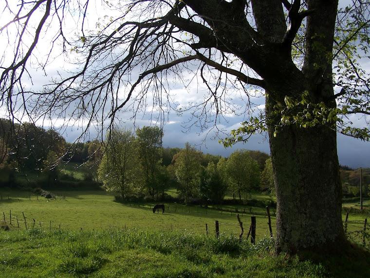 Naturaleza y bonsái desde Galicia