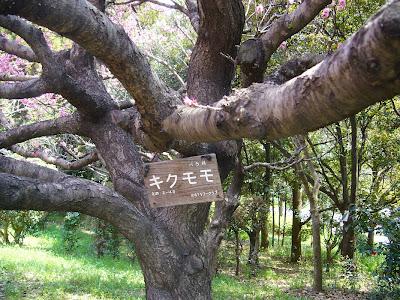 花博記念公園鶴見緑地ウォーキング・キクモモ