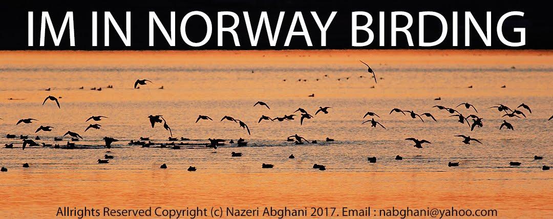 IMN Norway Birding