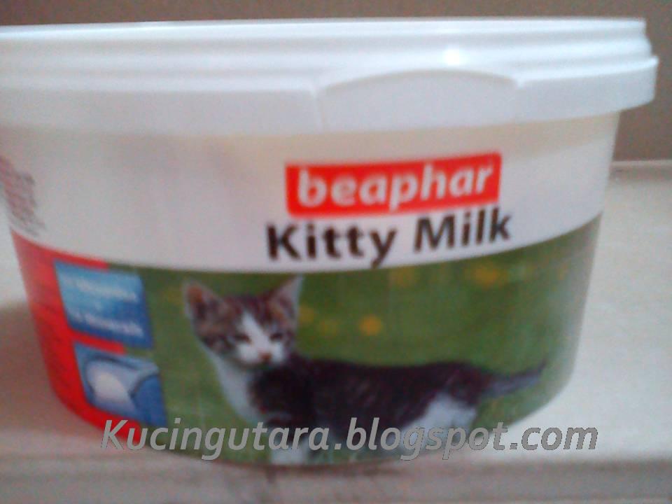 Kucing Utara Cara Menyusu Botol Anak Kucing