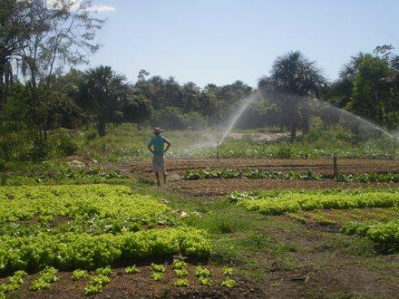 produtos organicos sem uso de agrotóxicos