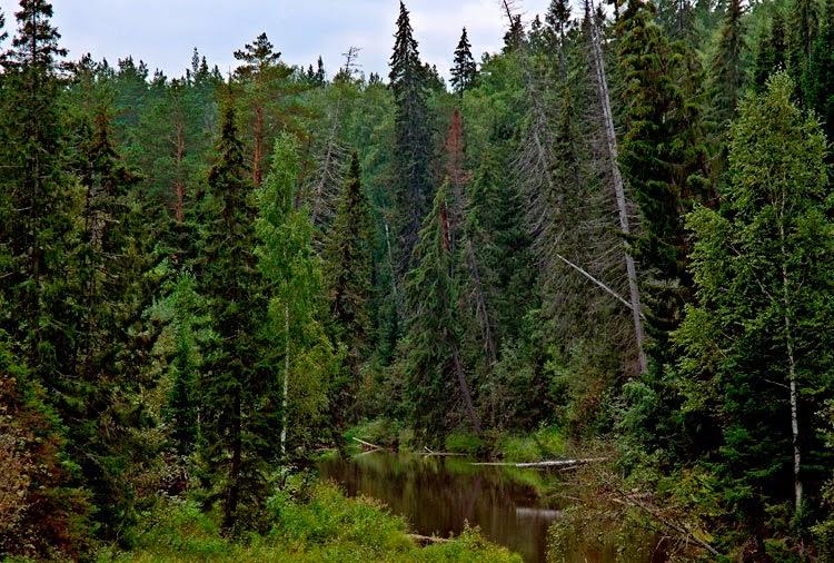 Ягоды леса картинки