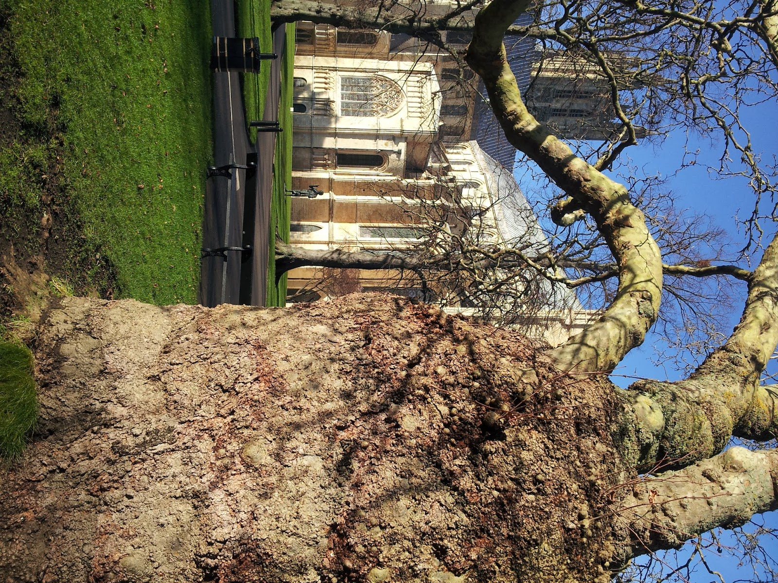 Home dear mr kourouma - Old London Plane Tree Frames The View Of Canterbury Cathedral