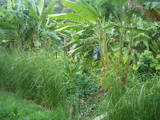Part of our Food Forest