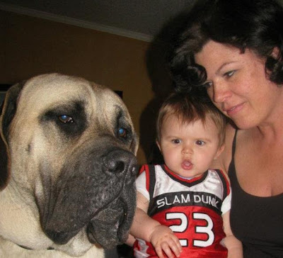 Retro Gran with grandson and English Mastiff