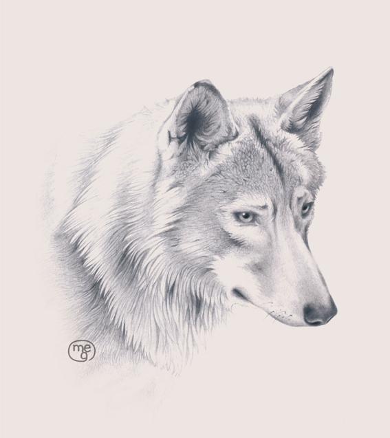 Illustr acchierando e di lupi soltanto for Disegni a matita di cani
