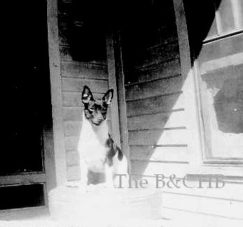 Blanche's dog Valentine, post Bonnie & Clyde years-- From my collection (Basenji??)