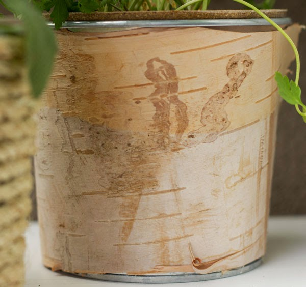 DIY birch bark planter