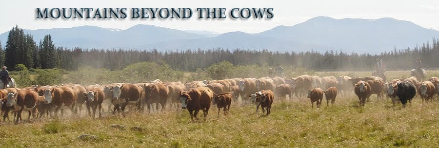Mountains Beyond The Cows