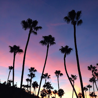 blue and pink sunset with palm trees silhouetted in black