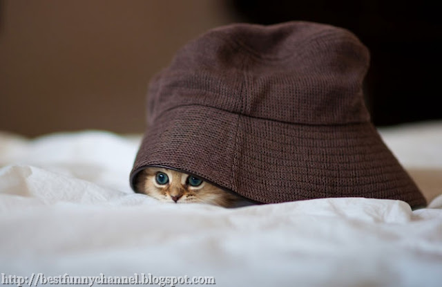Funny kitten under his hat