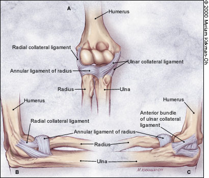 MRI Musculo-Skeletal Section: Ulnar Collateral Ligament
